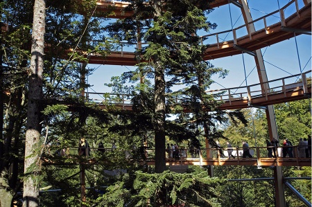 TREE TOP WALK-03